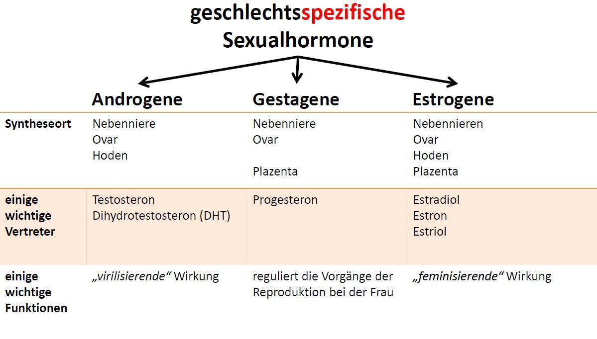 Sexualhormone – Hormoncocktail bei Mann und Frau – Die kleine Welt ...
